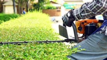 Tree and Lawn Care